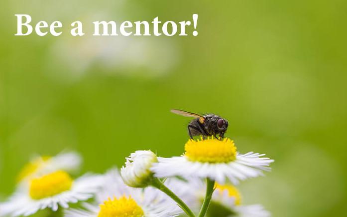 Bee a mentor